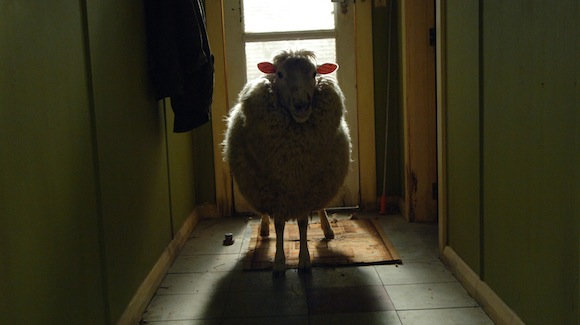 10760_black_sheep_screen_lamb