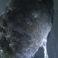 Slimy short film trailer for Stephen King's Gray Matter is practical effects madness